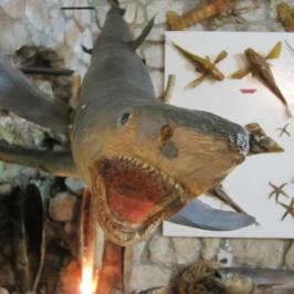 Музей морских ракушек Malakoloski Muzej