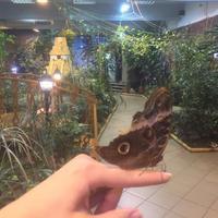 Сад живых тропических бабочек Миндо