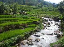 Terraced Rice Fields in Shin Chai Village