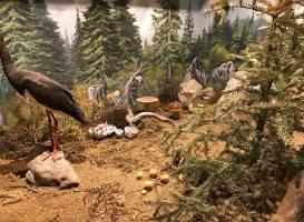Natural History Museum of Meteora & Mushroom Museum