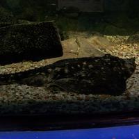 Muzeeaquarium Delfzijl