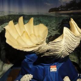 Magical World of Shells Museum