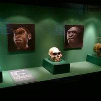 Facce I Molti Volti Della Storia Umana