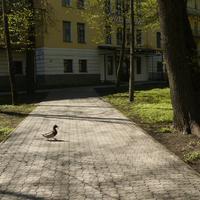 Курортный парк Старая Русса