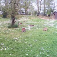 Polonezkoy Hayvanat Bahcesi