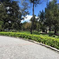 El Arbolito Park
