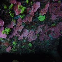 Amphibious Diving Center