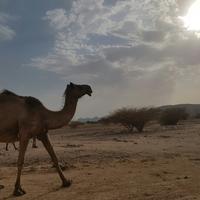 Wadi e Jinn - Al Baida