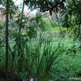 Humedal de Cordoba