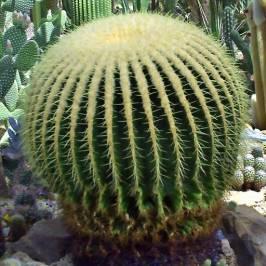Cacti Pavilion