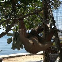 Daniel Johnson's Monkey and Sloth Hang Out