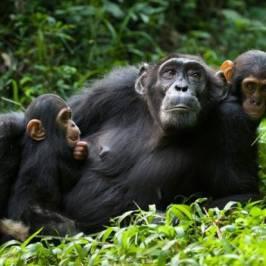 Gorilla Bookings