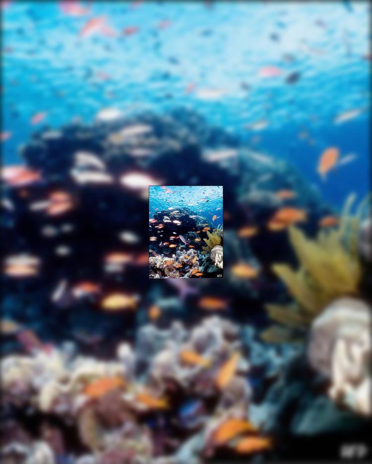 Австралия: Большой Барьерный риф в опасности