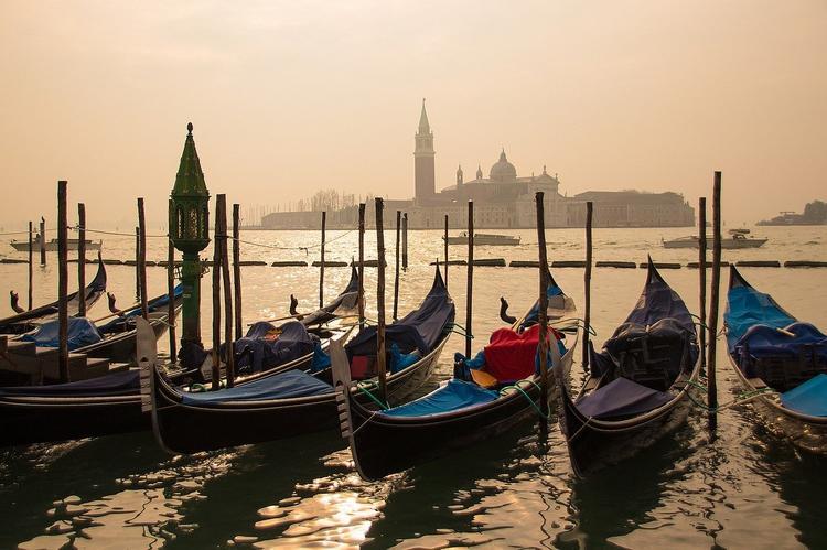 В каналах Венеции впервые отмечены случаи появления дельфинов