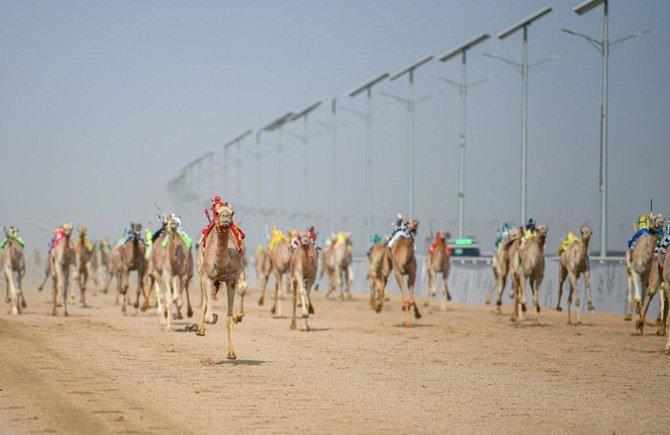 В Саудовской Аравии проходят крупнейшие в мире соревнования на верблюдах
